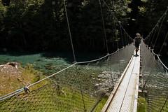 suspension bridge, reservoir, water, tree, river, canopy walkway, nature, forest, rope bridge, bridge,