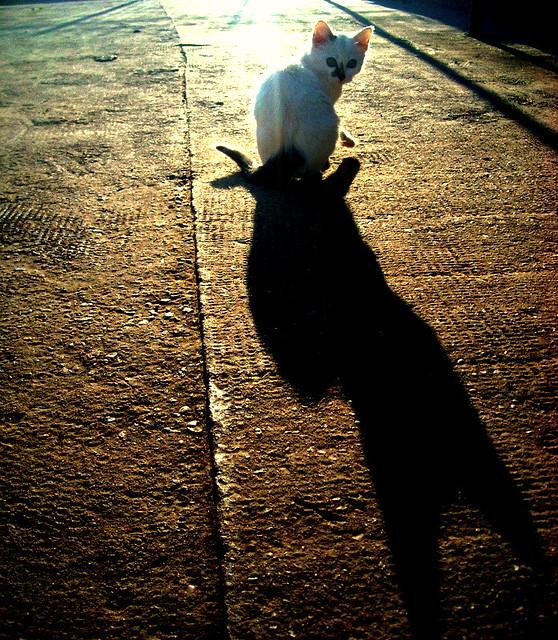 Header of Black Cat, White Cat