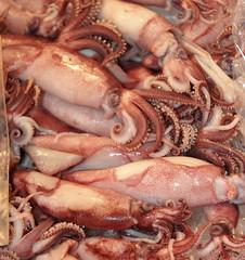 animal, squid, seafood, octopus, invertebrate, marine invertebrates, food,