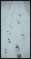 footprint(1.0), winter(1.0), white(1.0), snow(1.0), ice(1.0), monochrome photography(1.0), monochrome(1.0), winter storm(1.0), blizzard(1.0), black-and-white(1.0), freezing(1.0),