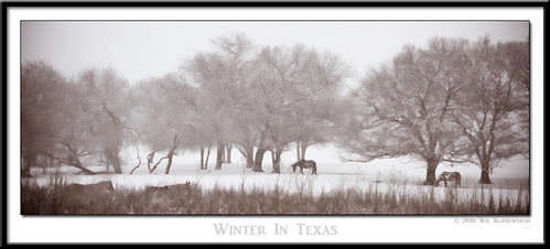 trees winter horses horse snow cold tree nature landscape nikon texas snowy frisco d700 top20texas bestoftexas
