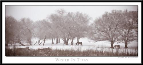 trees winter horses horse snow cold tree nature landscape nikon texas snowy frisco d700 top20texas bestoftexas