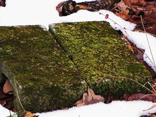 old usa snow green nature canon landscapes moss view state south peaceful powershot daytime arkansas tranquil ozark sx10is waltphotos