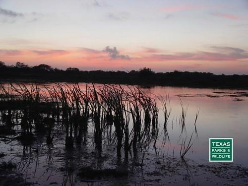 sunset visitorcenter southtexas weslaco texasparksandwildlife worldbirdingcenter esterollanogrande