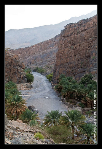mountains tree rock river gulf middleeast canyon palmtree riverbed oman wadi rivier alhamra flus ghul alhajarmountains addakhiliyahregion منطقةالداخلية addakhiliyah