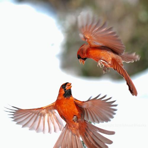 cardinal combat 5120