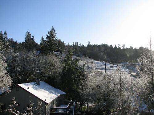 trees winter snow brooktrails