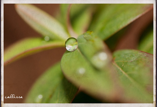 water leaf pattern bokeh saturday depthoffield droplet veins waterdroplets snrub callissacaffull