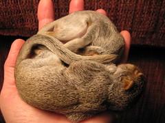 Squirrel Babies
