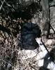 black bucket hidden underneath brush