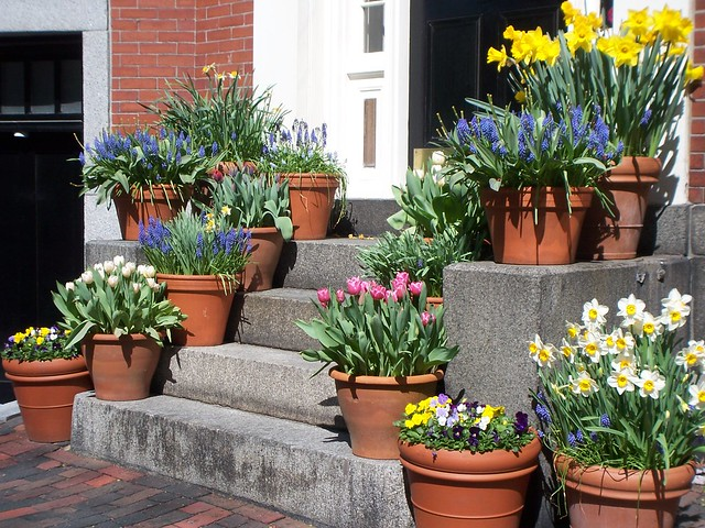 flowers in beacon hill