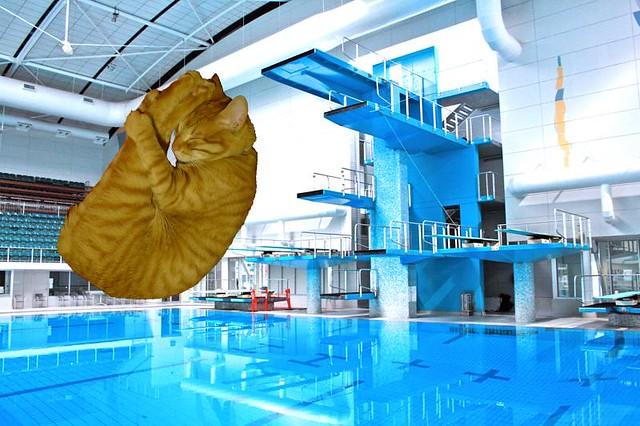 Salto olímpico | Flickr - Photo Sharing!