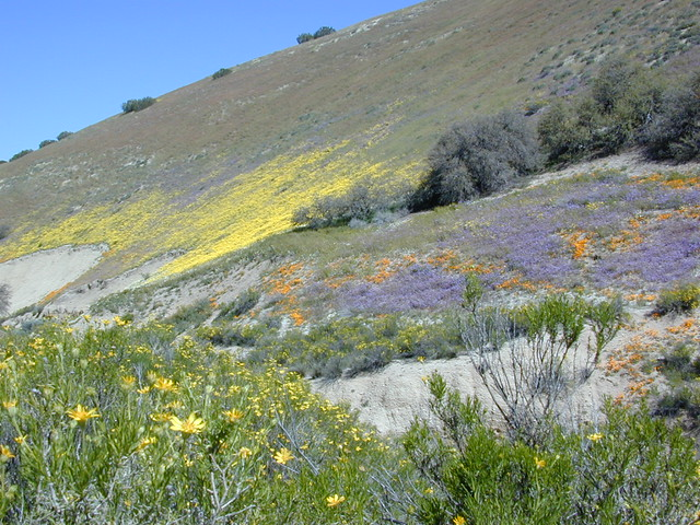 Klipstein Wildflowers