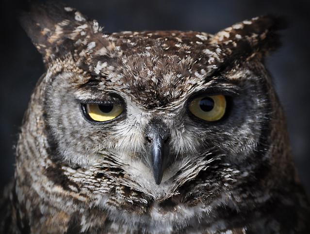 Winking Owl | Flickr - Photo Sharing!