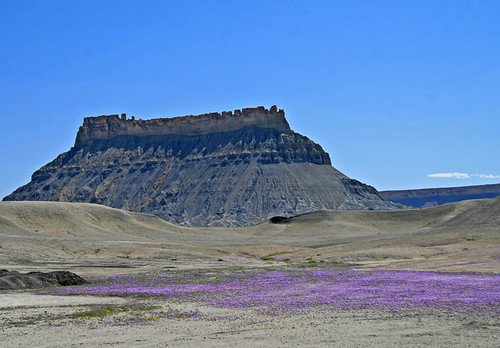Purple Butte Flowers