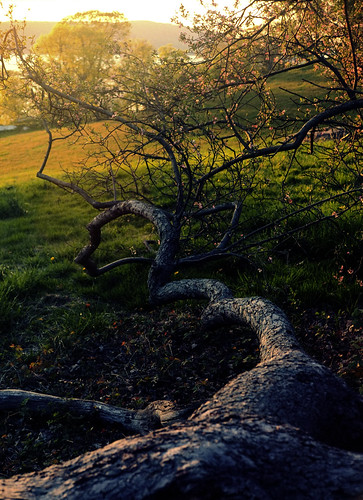 trees sunset usa newyork film yashicagsn westchester sleepyhollow rockwoodhall vuescan ektar100