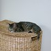 Small photo of ... on the hamper