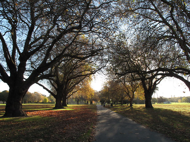 Hagley Park, Christchurch