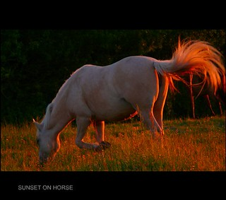 Sunset on horse