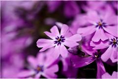 - small beauty -