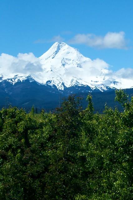 Mount Hood From The Hood River Railway Mount Hood And