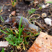 Alpine Newt - Photo (c) Matteo Paolo Tauriello, some rights reserved (CC BY-NC-SA)