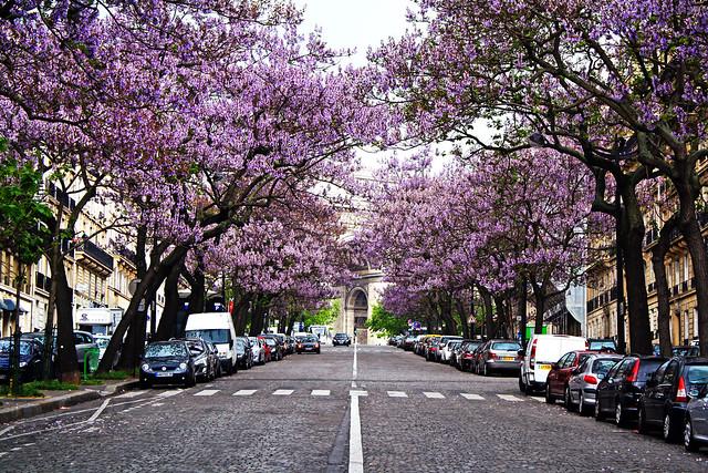 Avenue Carnot - Étoile