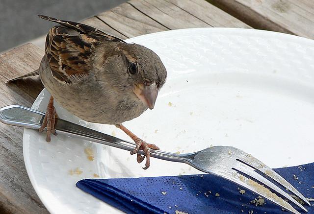 Scilly Sparrow, Panasonic DMC-FZ3