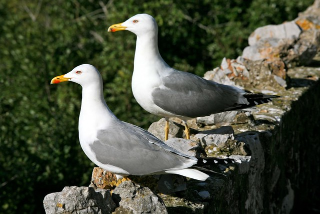Seagulls on Guard