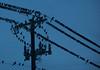 15.365 - Birds on Wire by Randy Herbert