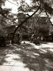 at shrine