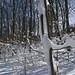 100206_SnowStorm_48