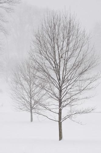 snow newjersey unitedstates essexcounty nj blizzard maplewood nikon70300mmvr maplewoodcountryclub