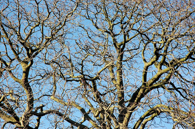 Image Result For Tree Gb Rp