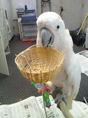 parrot rescue