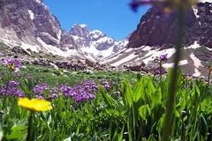 Newroz  kurd kurdistan
