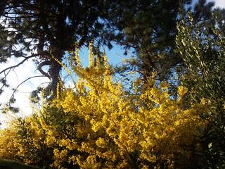 Bild av Valeggio sul Mincio. flowers parco garden fiori giardino valeggio mincio sigurtà
