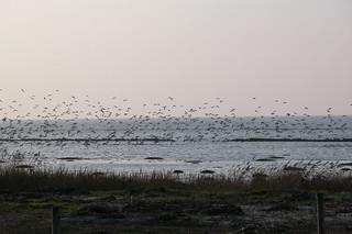 Wadden Sea, Netherlands