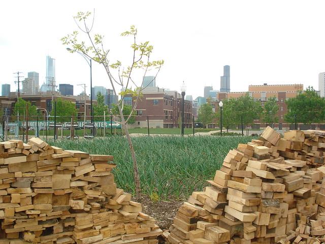 08 City Farm Chicago IL