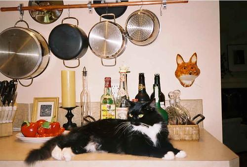 bartenderkitty