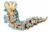 Tritonia hombergii, Ernst Haeckel, http://en.wikipedia.org/wiki/Ernst_Haeckel