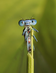Insect, by T@deo