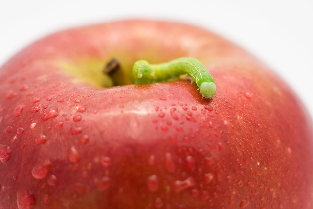 Worm and apple | Flickr - Photo Sharing!