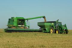 Harvest 041