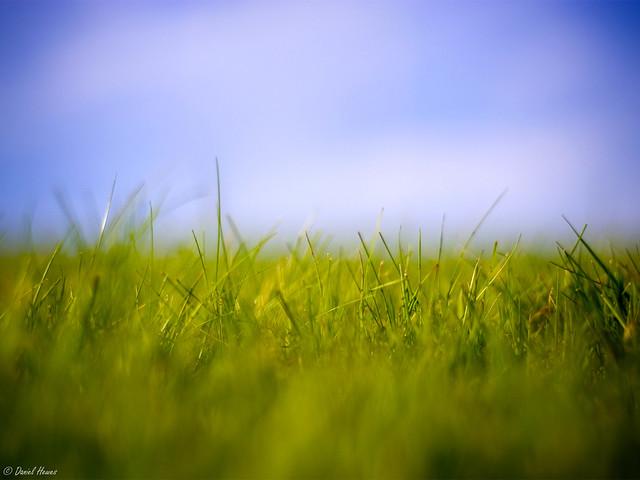 Grass Macro 1600x1200