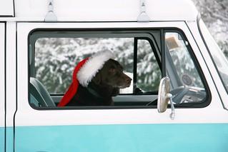 Dora Driving Home for Christmas