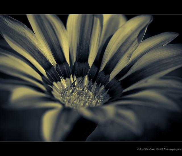 Flower ~ Project ~ 2010