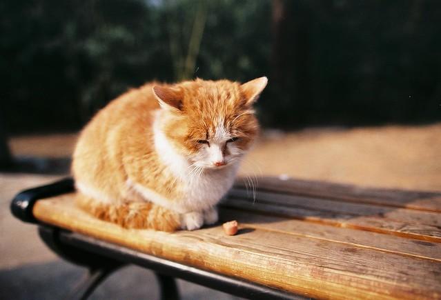 壁纸 动物 猫 猫咪 小猫 桌面 500_340