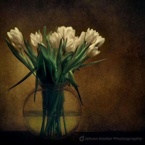 flowers stilllife tulips vase bunchofflowers infinestyle —obramaestra— magicunicornvereybest