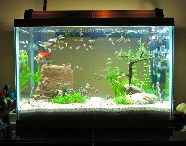 20 gallon aquarium flickr photo sharing for 20 gallon fish tank dimensions